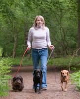 Dorset Dog Rescue Dogs Needing Homes
